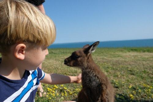 luxury family volunteer vacations in Australia