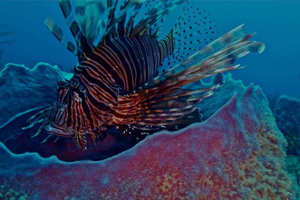 Belize-HUH-1000px-007