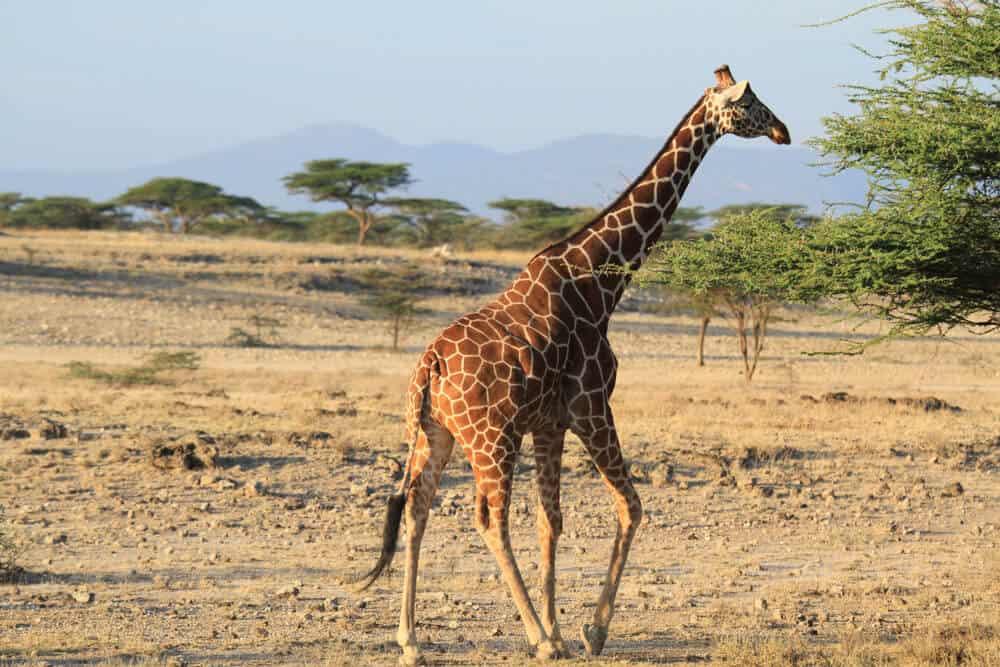 Kenya2-HUH-1000px-005