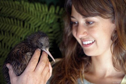 Luxury volunteering trip NZ