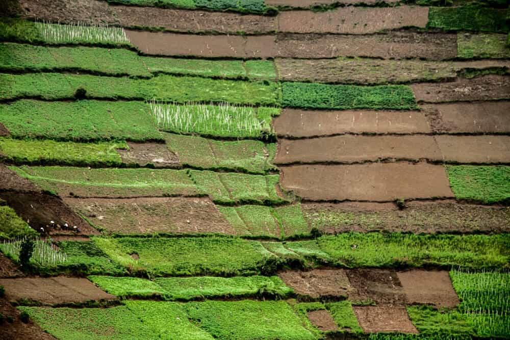 Rwanda-HUH-1000px-002