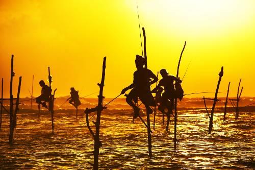 Luxury family volunteer vacation pole fishing in Sri Lanka